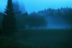 Ethereal Field (petterikari) Tags: nuuksio longexposure kattila tree woodlands field fog mist trees blue