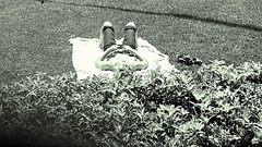Surreptitious Sunning (fillzees) Tags: candid outdoor girl woman supine lawn shrubbery bw street park blanket grass