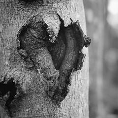 Stamm mit Herz
