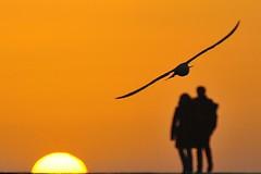 Sciacca, Sicilia - Porto dei pescatori (tango-) Tags: italy italia sicily italie sicilia sciacca tiberiofrascari highqualityanimals x xitaliexxxsicilyaxsicilexxszicliaxxx