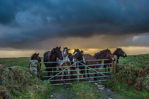 Horse Storm (intrazome) sunset england horses horse cloud sun field weather clouds outside outdoors countryside nikon gate cornwall farm country rays farmyard d5100