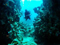 Mar Rojo (_pak_) Tags: aqaba buceo jordania submarinismo marrojo
