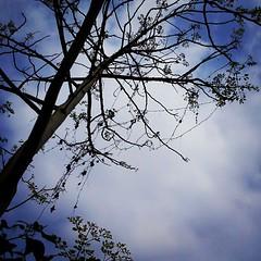 ใต้ต้นไม้ที่ไม่มีร่มเงา กิ่งก้านมันไม่ได้สูงสักเท่าไร แต่รากลึกลงในดิน หยั่งลึกลงในใจ คือความหมายที่มากมายตลอดมา