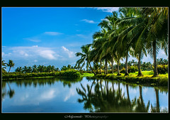 Reflection of sky's romance in the eyes of earth...!!! (Mysmile Photography) Tags: alone asia beautiful bestcapturesaoi blue evening flickrsfinestimages1 forest india island kerala kochi lake landscape love mangrove me2youphotographylevel1 me2youphotographylevel2 mountain mygearandme nature natureza ocean pleasure scenary shadow sky sunset trees wild thekkady birds boat day316 canon cherai davebrubeck day262 day333 day336 dec12 dec2012 dia29 eagle enmovimiento elappara family fishing frohesneuesjahr green itsenisyyspiv moon nostalgi periyartigerreserve reflection water worldaidsday coconut