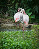 Singapore Zoo-95 (Jon Durman) Tags: animals zoo nikon wildlife april 2012 singaporezoo nikond700 nikon28300mm