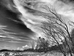 Directional (YAZMDG (16,000 images)) Tags: trees sky blackandwhite bw tree nature monochrome clouds mono wind noiretblanc australia nb ciel coastal nsw nuages yaz australie northernrivers angelsbeach lacune monomaniacal yazmdg ystudio yazminamichèledegaye