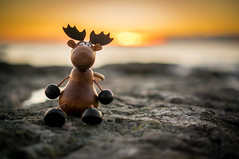 Elg i solnedgang II (Moose in sunset II) (Richard Larssen) Tags: life sunset norway 35mm toy toys secret sony norwegen moose richard scandinavia secretlifeoftoys jren rogaland oss morge ogna larssen emount nex6