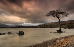"""My Tree"" (""Flashman"") Tags: beach clouds scotland scottish lochlomond balmaha scottishlandscape westscotland millarochybay"