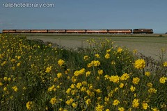 M001-00859.jpg (Colin Garratt) Tags: flowers ireland irish rural train countryside europe side railway cie 071