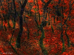 A color feast in the winter (amalia lam) Tags: wood light red green nature colors beauty leaves forest canon woodland photography landscapes shadows branches logs ground images trunks oaks twigs acorns chaparral photoshopcs5 amalialampri amalialam colorfeast