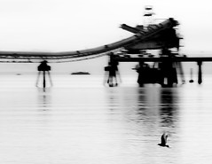motion (maplemusketeer) Tags: ocean sea bw bird water industrial bc britishcolumbia seagull tugboat sechelt sunshinecoast pacificcoast logbarge funked gravelconveyor