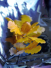 Hojas de roble. / Oak leaves. (Bernardo del Palacio) Tags: flowers blue naturaleza reflection verde reflections photographer screensaver maria quality catedral ciudad textures leon nubes reflejo otoño awards reflexions león reflejos autunm naturesfinest blueribbonwinner reflejada 5photosaday cloks thursdaywalk fantasticflower abigfave platinumphoto anawesomeshot superbmasterpiece diamondclassphotographer theunforgettablepictures betterthangood goldstaraward academyofphotographyparadiso qualitypixels musacmuseo flickrlovers