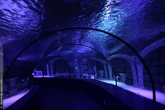 l'aquarium d'Antalya (Dominique Pipet) Tags: turkey aquarium photo tunnel turquie antalya trke akvaryum dompipet dominiquepipet