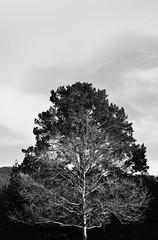 Life and death (Dani Toriumi) Tags: life blackandwhite tree nature death earth minimalism twigs