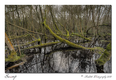 Swamp (Fred255 Photography) Tags: uk england water landscape landscapes swamp fred l usm ef 1740 gp waterscapes eos1ds llens greatphotographers ef1740mmf4lusm ef1740mm 1dsmk3 canoneos1dsmarkiii naturethroughthelens mygearandme fred255 greaterphotographers photographyforrecreation vigilantphotographersunite vpu2 vpu3