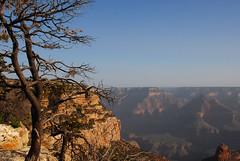A Grand Canyon morning (ho_hokus) Tags: morning arizona usa southwest tree sunshine america landscape view unitedstates grandcanyon az vista 2011 nikond80 tamron18270mm
