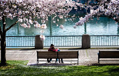Springtime Love under the Blossoms (Orbmiser) Tags: park trees oregon bench portland spring hugging nikon blossoms couples romance embracing d90 55200vr