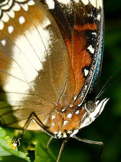 Close up the Butterfly