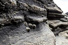 Texturas II (villacisla) Tags: textura conchas marisco sea mar rocas stone spain galicia