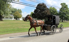 Amish Horse & Buggy (AZ Ashman 88) Tags: amish middlefieldohio amishcountry ohio horse horsebuggy driveby trumbullcounty