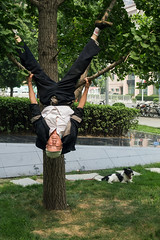 Upside down man (V1ao) Tags: china chinese oldman old man beijing dog tree green yellow street photography hanging asia