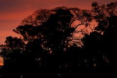 Bosques de Palermo. Buenos Aires (marmellamomar) Tags: puesta de sol atardecer fotografa bssa fotgrafo monocromtico rboles