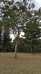 20160811_105737_HDR (filipealves1) Tags: sopaulo trees nature natureza parque ibirapuera brazil brasil