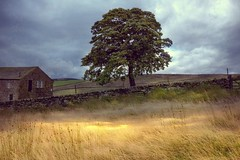 The Lone Tree and Farmhouse (vesna1962) Tags: scenery landscape tree farmhouse isolated lone bleak moor moorland moody rural countryside ponden haworth brontecountry westyorkshire england
