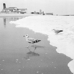 Asbury Park, NJ (Dalliance with Light) Tags: sand gull water scans film shore oceangrove beach ocean asburypark rodinalwithxtol standdevelopment nj bird bw tmax400 nikonfm2 seagull neptunetownship newjersey unitedstates us