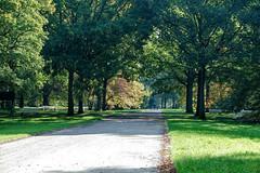Walk in the park (KPPG) Tags: kassel deutschland germany park karlsaue outdoor baum pflanze garten herbst autumn fall leave tree walk light shadow licht schatten samsungnx nx3000