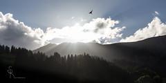heavenly (SteffPicture) Tags: heavenly cloud himmel sky vogel schwalbe wald forest sonne sonnenstrahlen wolken steffpicture canon lenk lenksimmental simmental switzerland visitswitzerland