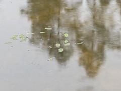 Pond 1 (schauplatz) Tags: regen spaziergang stuttgartrohr pond tmpel teich spiegelbild laub rain langzeitbelichtung