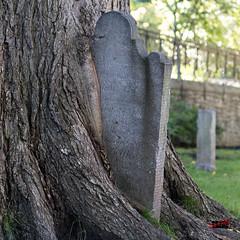 La nature, plus forte que la pierre *** EXPLORE *** (SergeCouture) Tags: gravestone pierretombale tree arbre villedequbec qubec canada ca bsquare square 11