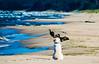hunting (Rafau_) Tags: golden retriever sea poland olympus eps7 100300mm summer