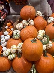 Fall Display - NYC (verplanck) Tags: chelsea manhattan nyc store display vegetables squash pumpkins