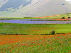 Castelluccio di Norcia e la fioritura (gengish) Tags: trip travel italy photography photo italia foto umbria fioritura castellucciodinorcia gengish