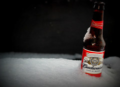 Best Served Chilled (morrisguy) Tags: snow ice beer canon 50mm bud budweiser lager chilled photoaweek ef50mmf18iilens t189522013