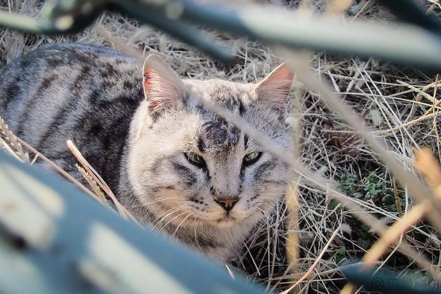 Today's Cat@2013-01-21