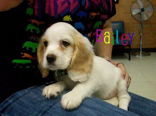 bailey-edw1