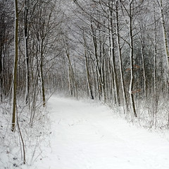 Forest Path (Andrew Lockie) Tags: uk winter england snow forest woodland day fuji path cotswolds clearing chipping copse campden xe1
