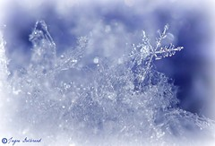 Snow Flakery! (nature55) Tags: blue winter snow cold ice snowflakes explore 490 nature55 jaynegulbrand