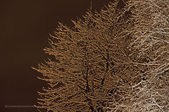 Night (Leifskandsen) Tags: winter snow cold tree nature norway night living scandinavia brum bekkestua leifskandsen skandsenimages