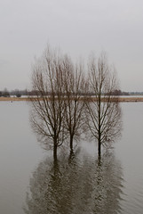 Driftwood (j.elemans) Tags: wood winter holland tree nature water dutch poetry poem sony boom beuningen uiterwaarden waal a300 hoogwater mygearandme mygearandmepremium mygearandmebronze mygearandmesilver blinkagain photographyforrecreation rememberthatmomentlevel4 rememberthatmomentlevel2 rememberthatmomentlevel3