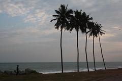 Elmina coconut (choupchoupchoup) Tags: africa sea castle beach saint clouds george ghana coconuttree elmina