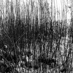 dancing in the snow (Rainer ) Tags: schnee light shadow bw snow grass bn sw gras nikkor28105 frohlinde rainer