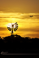 Windmill flyby. (Photography by Darren R) Tags: sunset shadow sky sun bird broken windmill silhouette clouds rural gold golden evening dusk country australia down run victoria pump outback damaged darrenr photographybydarrenr