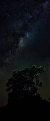 Waihi Beach Milky Way (waltmanNZ) Tags: trees newzealand beach way stars landscape space astrophotography astronomy milky waihi milkyway