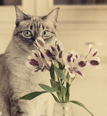 Flores para Aurelia / Aurelia Flowers (pimontes) Tags:  hss