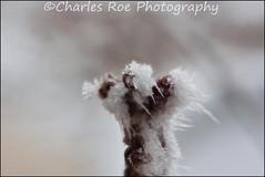 2013-02-11-10.22.11 ZS PMax (Charles Roe Photography) Tags: test macro icecrystal charlesroe zerenestacker