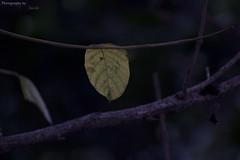 Leaf me alone! (Harish S Photography) Tags: tree green canon leaf alone bangalore 300mm karnataka individuality koramangala savetrees 60d 3rdblock tamron70300vc